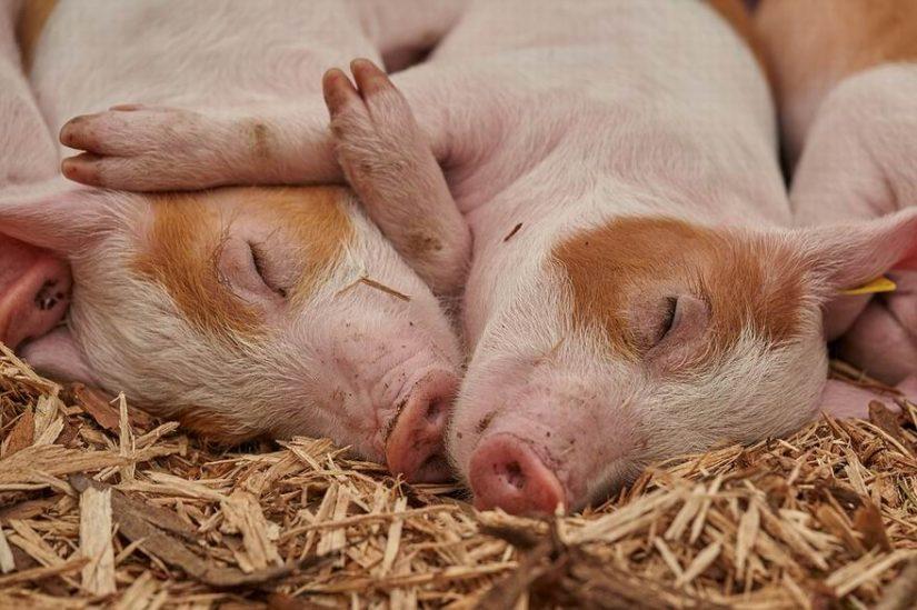 Július 14-én újra megnyílik az állattartó telepek fejlesztését támogató felhívás